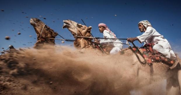 foto-carrera-de-camellos