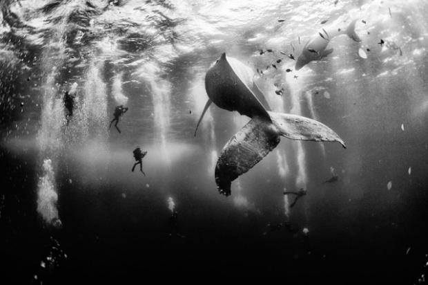foto-surro-de-ballena