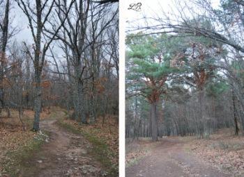 camino-ruta-el-chorro-granja-san-ildefonso