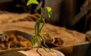 bowtruckle Fantastic Beats